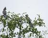 GoWayBird Polokwane _14-03-03__O6B0720
