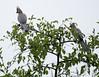 GoWayBird Polokwane _14-03-03__O6B0719