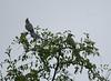 GoWayBird Polokwane _14-03-03__O6B0717