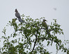 GoWayBird Polokwane _14-03-03__O6B0716