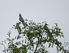 GoWayBird Polokwane _14-03-03__O6B0715