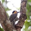 FieldFlicker Pantanal_7I2B9676_10-09-27