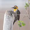 FieldFlicker Pantanal_10-09-28_7I2B9873