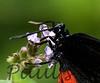 BluDots StaBarb_09-08-26_0008-638466299-O