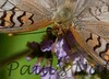 UnidedNymph StaBarb_09-08-26_0-638467312-O