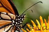 Monarch StaBarb_09-08-26_0018-638466687-O
