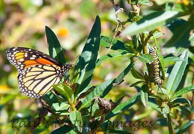 Monarch+Cater  BkYrd_IMG_4442_-1560819663-O