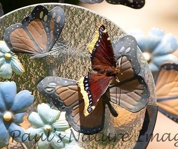 MournClk BkYrd_7I2B5903_2011-0-1429080345-O