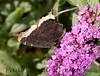 MournClk BkYrd_7I2B6036_2011-0-1429081941-O
