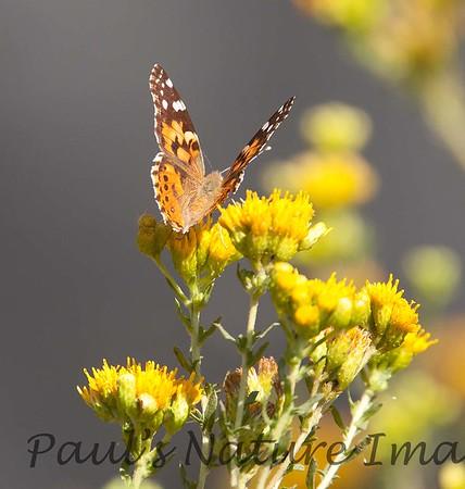 Butterfly BolChica_7I2B0112_20-1433982497-O