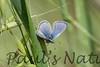 Butterflies CLU_7I2B9660_10-03-886137947-O