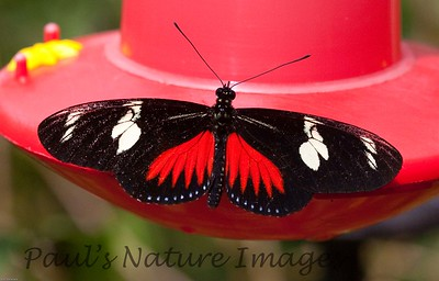 Butterfly CR_16_02-20-06-509136202-O