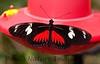 Butterfly CR_16_02-20-06-509136202-O