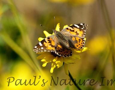Butterflies CLU_7I2B9667_10-03-886138098-O