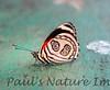 Butterfly-88 (5)-509135266-O