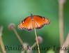 Butterfly CR_2_02-24-06-509135588-O