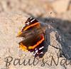 Butterfly CLU_16_05-15-06-509135407-O