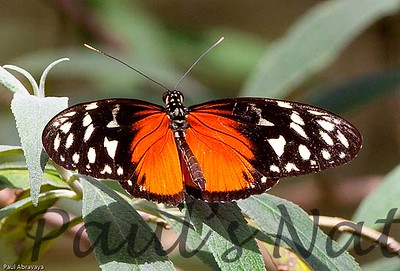 Butterfly CR_12_02-19-06-509135498-O