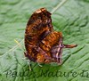Butterfly CR_16_02-19-06-509135807-O