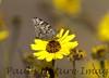 Butterflies CLU_7I2B9674_10-03-886138167-O