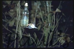 bat feeder1-1100685458-O