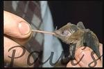 bat,Tongue-1100685496-O