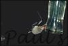 bat feeder2-1100685472-O