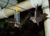 Bats_14-10-11_IMG_8466