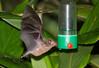 Bats_14-10-11_IMG_8383