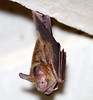 Bats_14-10-10_IMG_8133