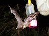 Bats_14-10-11_IMG_8479
