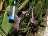 Bats_14-10-11_IMG_8549