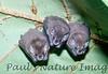 bats tent (4)-529835968-O