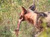WildDog Kirkman_14-03-16__O6B2439