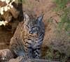 BobCat Tucson_10-10-23_0013-1077550496-O