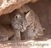 BobCat Tucson_10-10-23_0026-1077550893-O