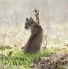 Bobcat CanadaLarga_7I2B4744_09-733539027-O