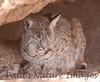 BobCat Tucson_10-10-23_0034-1077551254-O