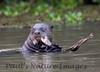 GiantOtter Pantanal_7I2B0168_1-1085712664-O