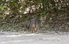 GreyFox Tikal_16-02-09_3V7A6838
