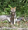 GreyFox Tikal_16-02-09_3V7A6850