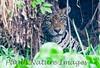 Jaguar CuiabaRv_7I2B9575_10-09-1085816219-O