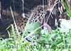 Jaguar CuiabaRv_7I2B9532_10-09-1085813915-O
