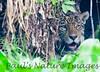 Jaguar CuiabaRv_7I2B9553_10-09-1085814764-O