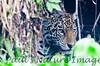 Jaguar CuiabaRv_7I2B9550_10-09-1085814386-O