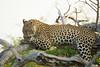 Leopard Kirkman_14-03-16__O6B2587