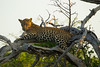 Leopard Kirkman_14-03-16__O6B2608