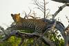 Leopard Kirkman_14-03-16__O6B2609