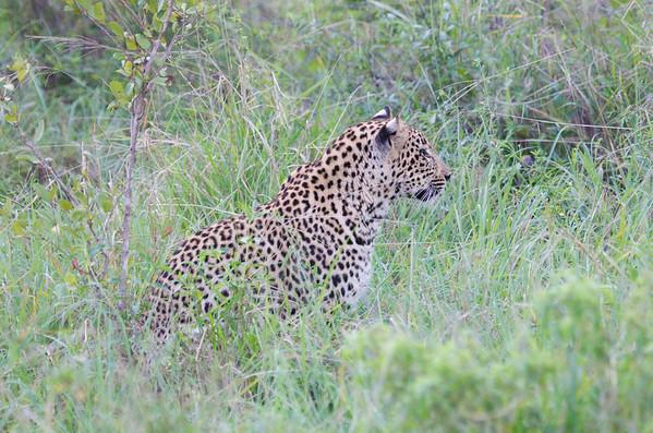 Leopard Kirkman_14-03-15__O6B2197