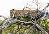Leopard Kirkman_14-03-16__O6B2591
